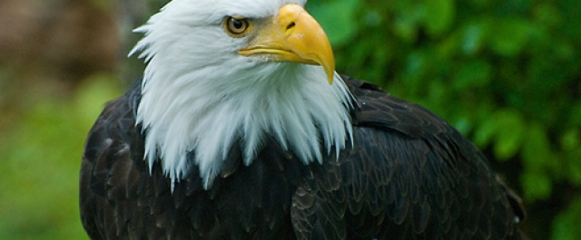 """PODCAST: """"Are You An Eagle Or A Barn Yard Chicken 1?"""""""